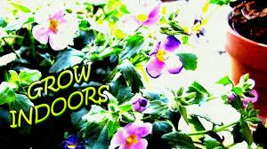 indoors garden growing succulents indoors diy home garden ideas for your home