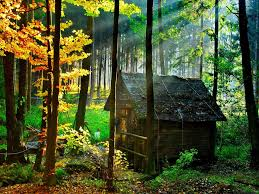 abandoned house in the forest wallpaper wide hd 112 wooden
