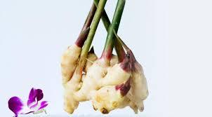 comment cuisiner le gingembre comment faire pousser du gingembre à la maison nos conseils