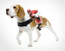 Motorcycle Halloween Costume Motorcycle Rider Dog Costume Harness