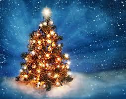 Helms Christmas Tree Farm - twinkle christmas tree rainforest islands ferry