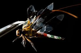 cyborg dragonflies are officially a reality after tiny insects