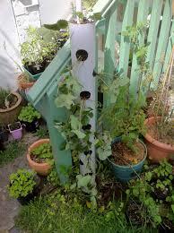 Vertical Veggie Garden How To Make A Vertical Strawberry Tube Planter Strawberry Tower
