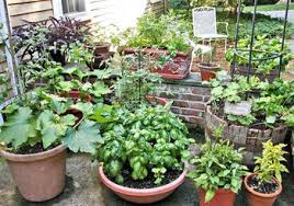 10 great vegetables to grow in containers