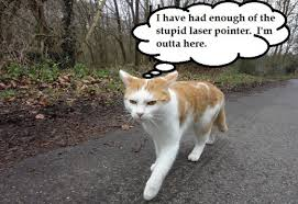 Tired Cat Meme - funny cat memes and pictures about cat behavior hubpages