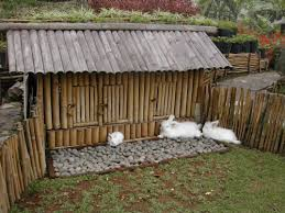 rabbit hutch and play area i wish our zoo pinterest