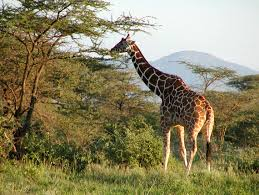 african safari animals custom african safari pot of gold at the end of the rainbow u2013 your