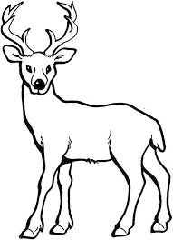 printable deer coloring pages for kids of baby animal hunters