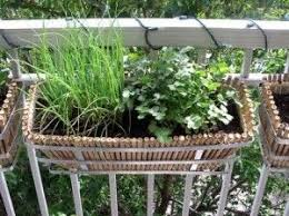 herb planter boxes best 25 balcony herb gardens ideas on pinterest patio herb