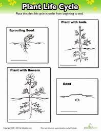 plant growth worksheet worksheets
