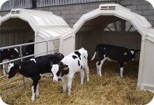 Calf Hutches For Sale Group Calf Hutches The Multimax From Calf Tel