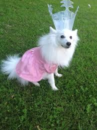 wizard of oz glinda child costume amazon com wizard of oz dorothy pet costume large dog costume