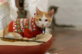 sweaters for cats live feed cats tv is a roomful of cats in
