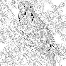 budgie parakeet parrot coloring coloringpageexpress