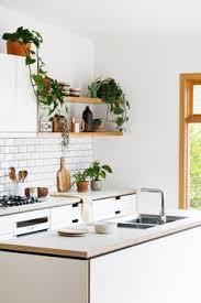 minimal kitchen with plants kitchen design inspiration