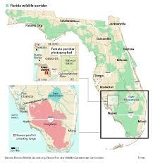 Hummingbird Migration Map Camera Trap Image Of Florida Panther Brings New Hope To