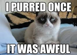 Smiling Cat Meme - 10 of the funniest grumpy cat memes