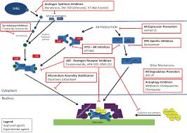 mechanisms of resistance in castration resistant prostate cancer