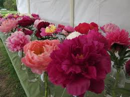 peonies for sale gardening events include tour on the coast plant sale