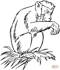 chimpanzee coloring pages coloring page