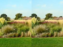 ornamental grass bed at kew brush stereo by aegiandyad on