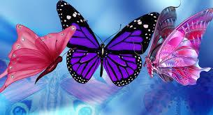 butterfly cartoon finger family nursery rhymes for children