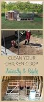 follow these easy steps to clean your chicken coop safely coops