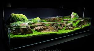 Aquascape Chicago Aquarium Hardscape Supplies Hardscape Materialshardscape