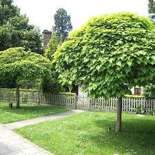 best 25 umbrella tree ideas on miniature trees diy