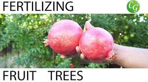 how to fertilize fruit trees fertilizing schedule u0026 guide youtube