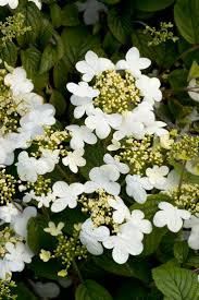 125 best plants trees images on pinterest flowers gardens and
