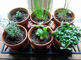 windowsill herb garden how to grow indoor plants expert