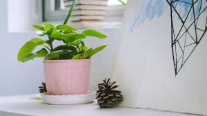 how to keep indoor plants healthy