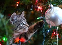 cat christmas how to keep your cat the christmas tree
