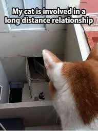 Distance Meme - 25 best memes about long distance relationships long