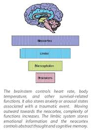 Part Of Brain That Controls Arousal Best 25 Function Of Brain Ideas On Pinterest Brain Lobes And