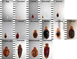 Bug Bombs For Bed Bugs Bed Bugs Central Termite U0026 Pest Control Little Rock Arkansas
