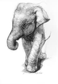 photos animals drawings in pencil easy drawings art gallery