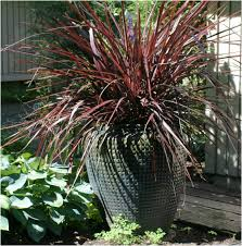 black gold premium organic potting soils fertilizers and