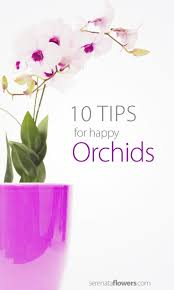 wild orchid home decor best 25 orchid food ideas on pinterest orchid care watering