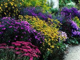 Plant Flower Garden - best 25 flower garden design ideas on pinterest growing peonies
