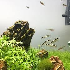 Mountain Aquascape Andrew Aquascapes Or Instagram Photos And Videos