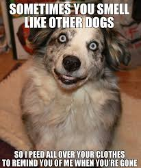 Frowning Dog Meme - crazy eyes dog meme pinterest crazy eyes meme and funniest