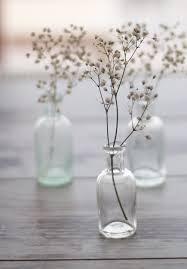 Single Stem Glass Vase Simple Angel Breath W Clear Glass Vase 21st Birthday Party