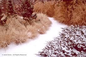 winter gardening janet davis explores colour