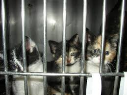 turned away a closer look at u0027no kill u0027 animal shelters peta