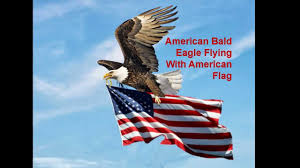 Americain Flag American Bald Eagle Flying With American Flag 138 Youtube