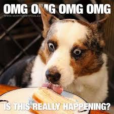 Birthday Cake Dog Meme - cake archives very funny pics