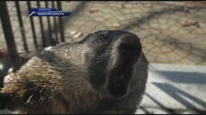 hampton couple menaced by aggressive groundhog