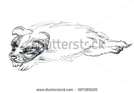 sketch sleeping puppy stock illustration 415014121 shutterstock